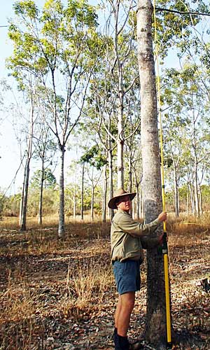 Alex Lindsay - Tropical Timber Plantation Advisor
